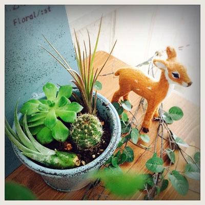 多肉植物 グリーン 寄せ植え